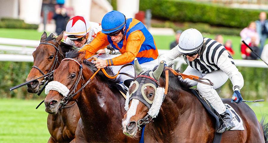 hipodromo zarzuela plan carrera caballos domingo